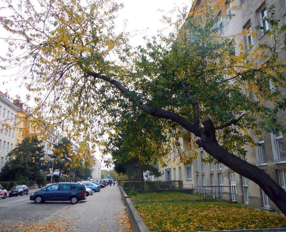 Baumkontrolle in Wien