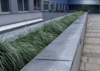 Dachbegruenung mit Graeser in Pflanzgefaeßen