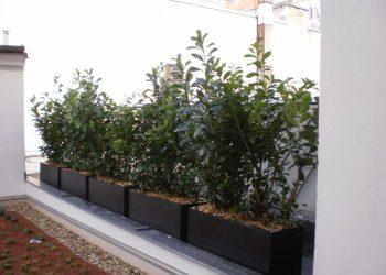 extensive Dachbegrunung mit Containerpflanzen