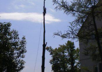 vorsichtiges Roden mit Kletterseiltechnik