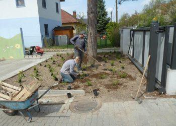 Bodendeckersetzen in Wien