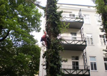 Baumabtragung Doppelseil Klettertechnik