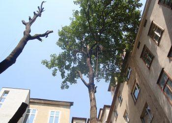 Baumrodung Wien Umgebung