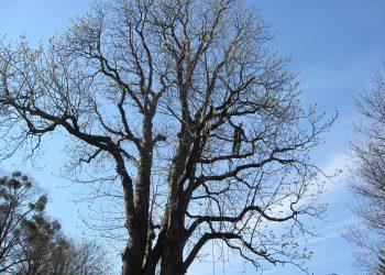 Baumschnitt Wien