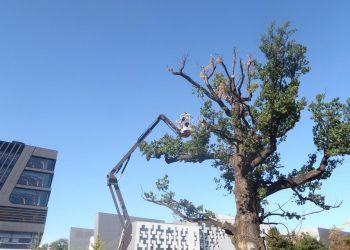 Messe Baumpflege Eiche